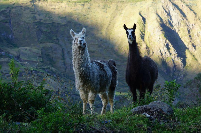 Part Thirty Eight – CentralEcuador
