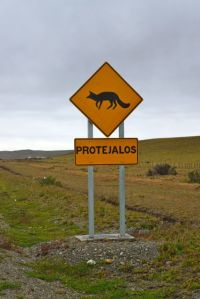 The sign requests us to protect it, but what the hell is the endangered split-headed-beavertail -asaurus?!